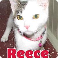 Adopt A Pet :: #20 Reece - Lawrenceburg, KY