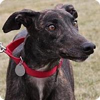 Adopt A Pet :: Arkans Lady - Carol Stream, IL