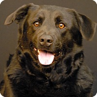 Adopt A Pet :: Ralph - Newland, NC