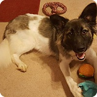 Adopt A Pet :: Ashlynn - Nashua, NH