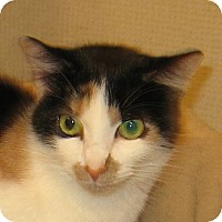 Adopt A Pet :: CALLIE-2013 - Hamilton, NJ