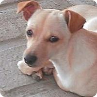 Adopt A Pet :: Tristan - Seattle, WA