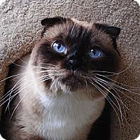 Adopt A Pet :: Marlee - Palmdale, CA