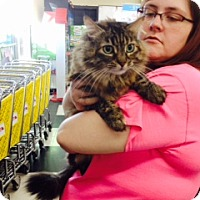 Adopt A Pet :: Starr - Troy, OH