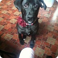 Adopt A Pet :: Gatsby - Acushnet, MA