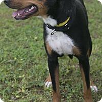 Adopt A Pet :: Jena (MRHS) - Brattleboro, VT
