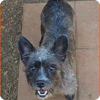 Adopt A Pet :: Lizzie - Homewood, AL