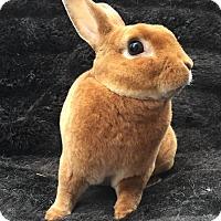 Adopt A Pet :: Gunther - Watauga, TX
