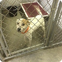 Adopt A Pet :: MADDIE - Grand Island, FL