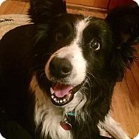 Adopt A Pet :: Rae - Bellevue, NE