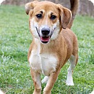 Adopt A Pet :: Sophia ADOPTION PENDING