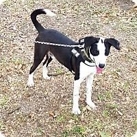 Adopt A Pet :: Bubba - Houston, TX