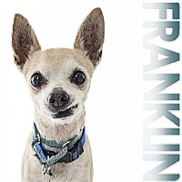 Adopt A Pet :: Franklin - Fullerton, CA