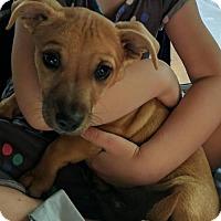 Adopt A Pet :: Rufus Xavier Sasparilla - Tucson, AZ
