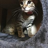 Adopt A Pet :: Max - Lakeland, FL