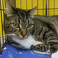 Adopt A Pet :: Dexter - Palo Cedro, CA
