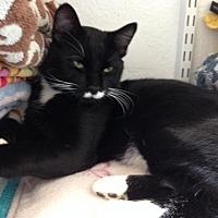 Adopt A Pet :: Wilbur - Alamogordo, NM