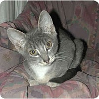 Adopt A Pet :: Ricky - Portland, OR