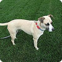 Adopt A Pet :: Beauty - Minnetonka, MN