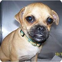 Adopt A Pet :: Tinker - Plainfield, CT