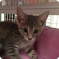 Adopt A Pet :: Wednesday - East Meadow, NY