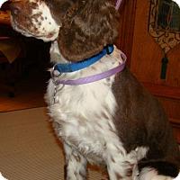 Adopt A Pet :: Tessa - Sugarland, TX