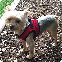 Adopt A Pet :: Cocoa - Leesburg, FL