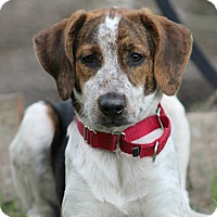 Adopt A Pet :: Jelly - SOUTHINGTON, CT