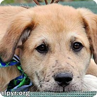 Adopt A Pet :: Freckles - new pup! - Beacon, NY