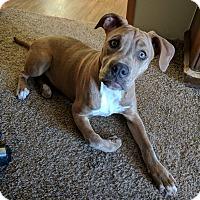 Adopt A Pet :: Puddin - Harrisonburg, VA