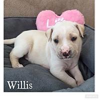 Adopt A Pet :: Willis - Summerville, SC
