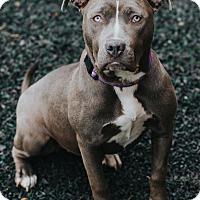 Adopt A Pet :: Dasha - Indianapolis, IN