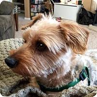 Adopt A Pet :: Puff Daddy - Sinking Spring, PA