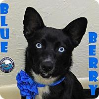 Adopt A Pet :: Blueberry - Arcadia, FL