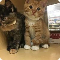 Adopt A Pet :: Symba - Philadelphia, PA