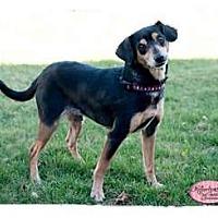 Adopt A Pet :: Baba - Haverhill, MA