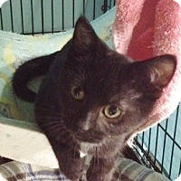 Adopt A Pet :: Rufus Jr - Byron Center, MI