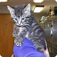 Adopt A Pet :: Aurora - Dover, OH