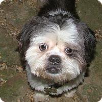 Adopt A Pet :: Lady Bug - North Little Rock, AR