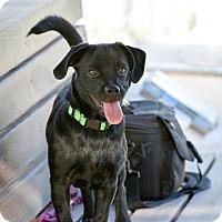 Adopt A Pet :: Milo - Meridian, ID