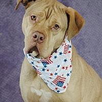 Adopt A Pet :: Leonidas - Lawrenceville, GA