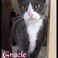 Adopt A Pet :: Gracie Gray - Foster / 2014 - Maumelle, AR