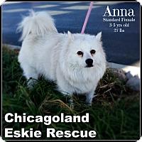 Adopt A Pet :: Anna - Elmhurst, IL
