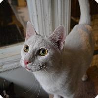 Adopt A Pet :: Windsor - Broadway, NJ