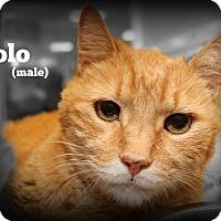Adopt A Pet :: Polo - Springfield, PA