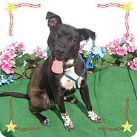 Adopt A Pet :: BECKS - Marietta, GA