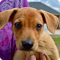 Adopt A Pet :: Gabe - Springfield, MA