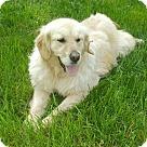 Adopt A Pet :: Maisie