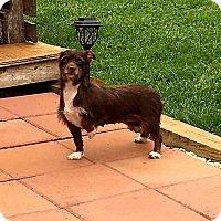 Adopt A Pet :: Ginger - Troutville, VA