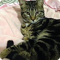 Adopt A Pet :: Junior - San Diego, CA